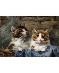 """Картины по номерам """"Милые котята в корзине"""", 30x40 см"""