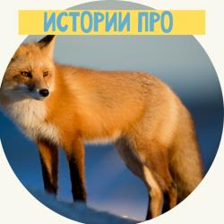 Книги о лисах для всех возрастов