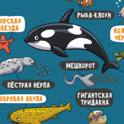 На воде и под водой: non-fiction для дошкольников