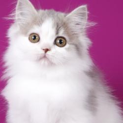 «Без кота и жизнь не та!»