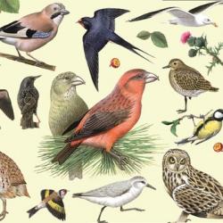 На языке пернатых: энциклопедии и книги о птицах