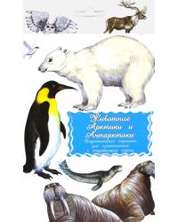 Дидактические карточки. Животные Арктики и Антарктики