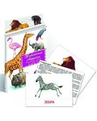 Дидактические карточки. Животные Африки
