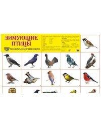 """Демонстрационный плакат """"Зимующие птицы"""""""