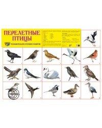 """Демонстрационный плакат """"Перелетные птицы"""""""