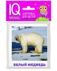 Набор карточек для детей. Животные полярных широт