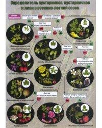 Наглядный определитель кустарников, кустарничков и лиан средней полосы России в весенне-летний сезон
