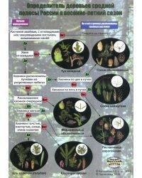 Наглядный определитель деревьев средней полосы России в весенне-летний сезон