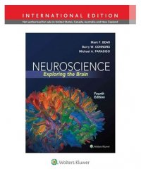 Neuroscience. Exploring the Brain