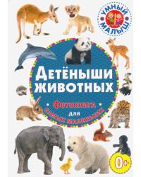 Детеныши животных.