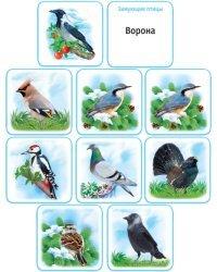"""Набор обучающих карточек """"Перелетные и зимующие птицы"""""""